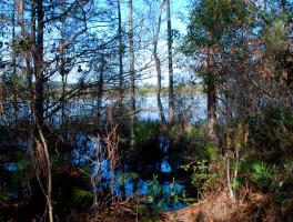 Isle of Pine Preserve Green Trail