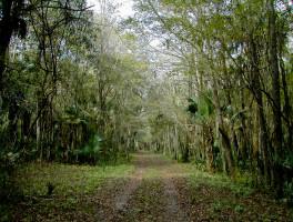 Sabal Point Sanctuary