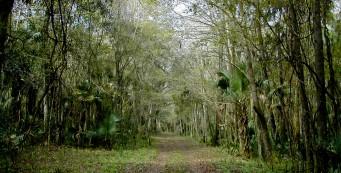 Sabal Point Preserve