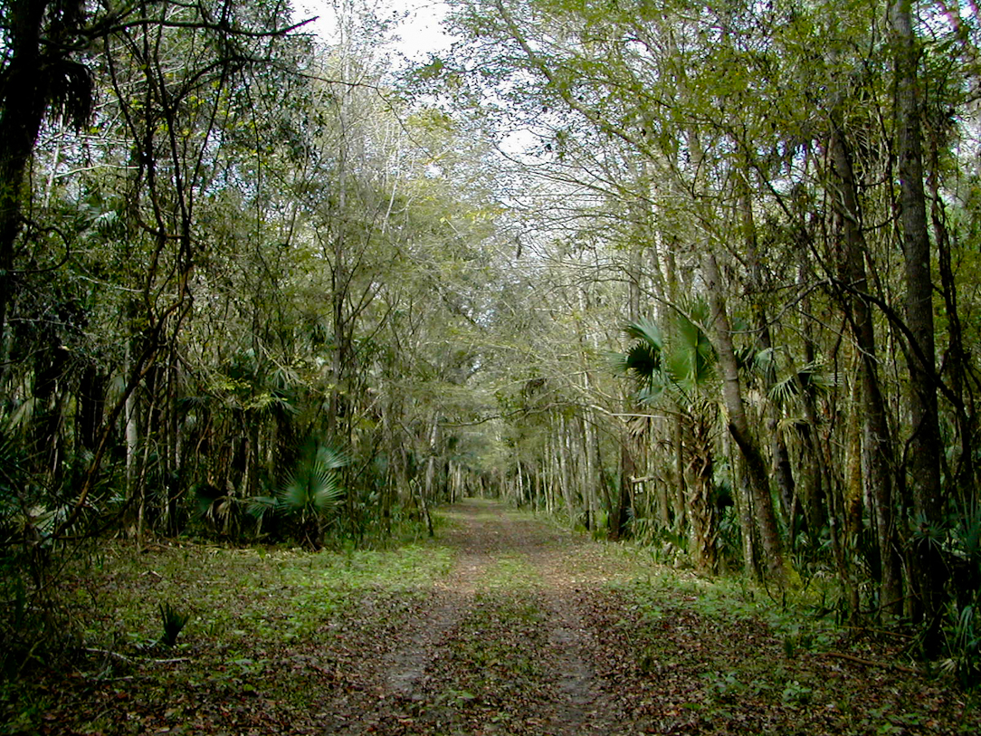Sabal Point Preserve