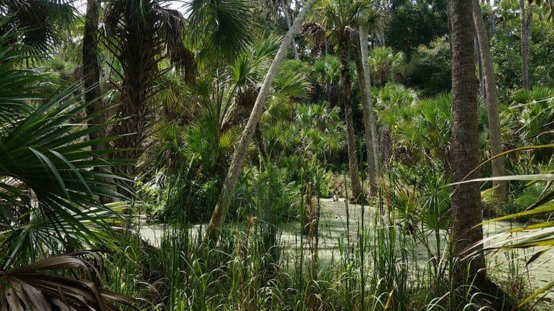 swampy stream feeding Bulow Creek