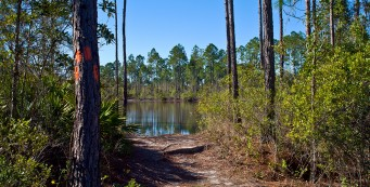 Florida Trail, Buckman Lock to SR 20