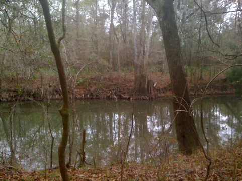 Chipola River in January 2012