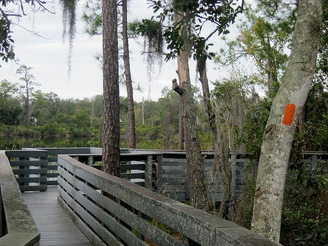Boardwalk around Round Lake
