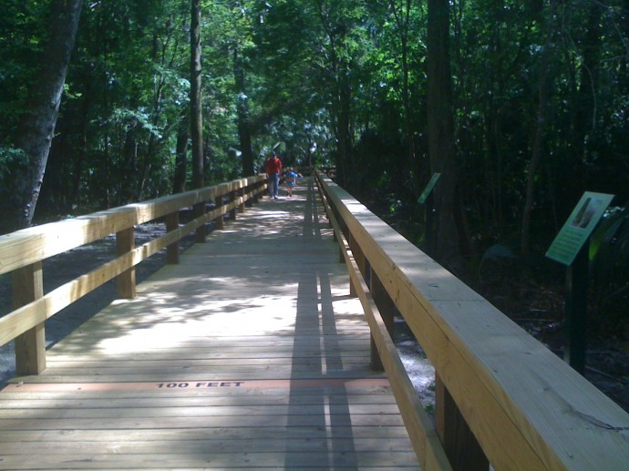 New boardwalk at Big Tree Park