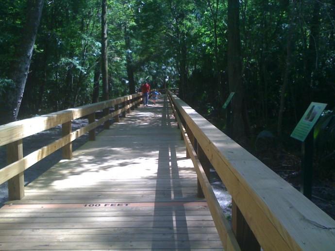 New boardwalk at Big Tree Park