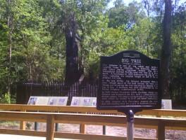 Return to Big Tree Park