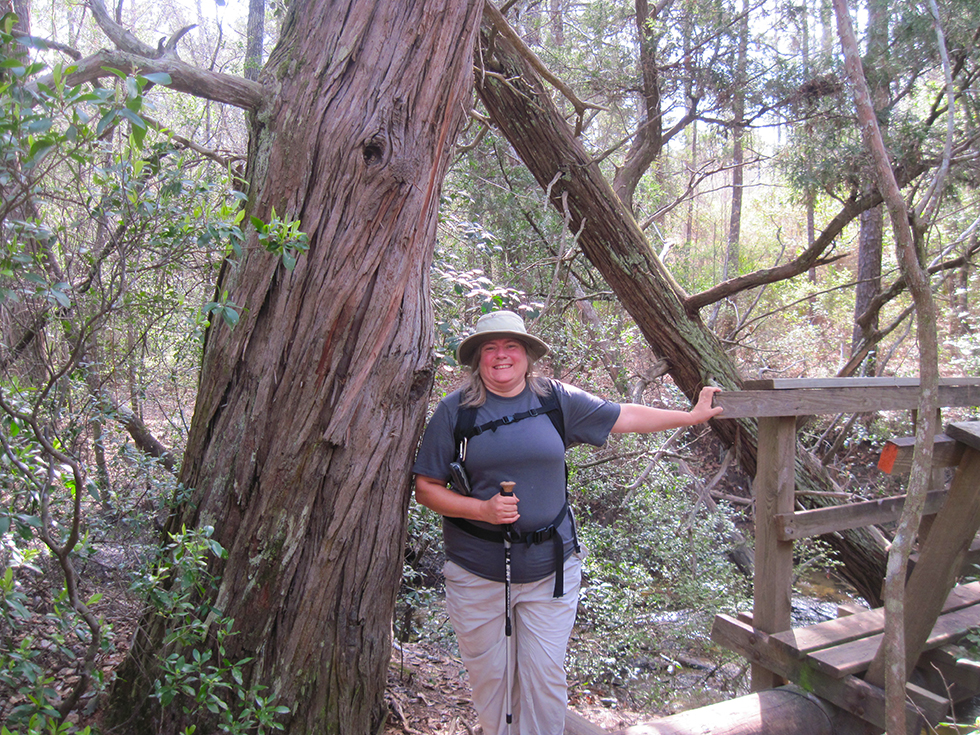 Sandy and a very large cedar