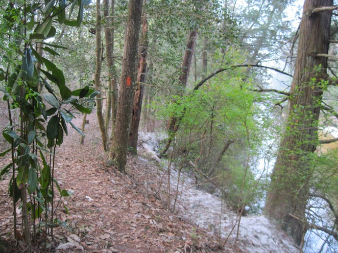 Wiregrass Trail rimmed with sand along the Blackwater River