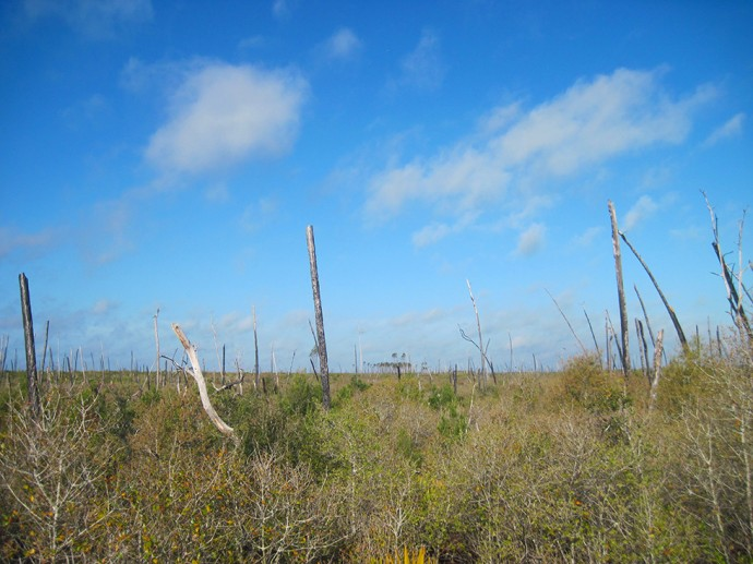 Dead trees in the Juniper Prairie Wilderness