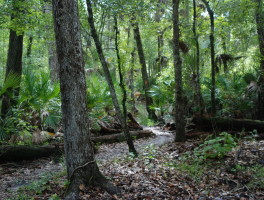 Florida Trail for Scouting
