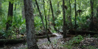 Florida Trail, Little Big Econ
