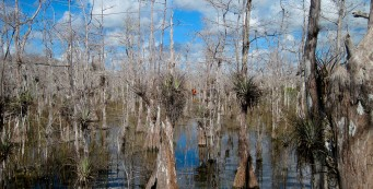 Florida Trail, Big Cypress