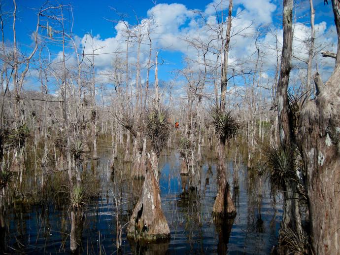 Florida Trail, Big Cypress