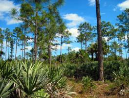 Florida Trail, Ocean-to-Lake