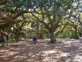 Florida Trail, Kissimmee