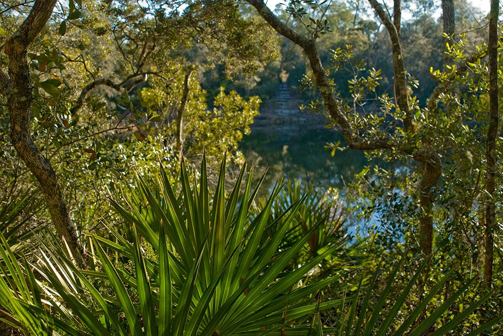 Florida Trail Big Sink Ocala