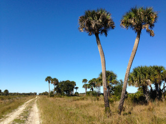 FT Kissimmee Prairie South