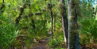 Florida Trail, Little Big Econ