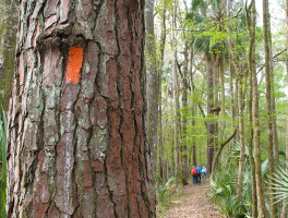 Florida Trail, Northeast Florida