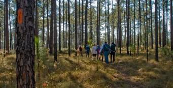 Florida Trail, Ocala section