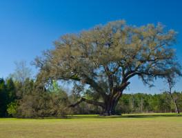 Cellon Oak Park