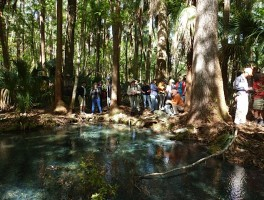 The beauty of Seminole State Forest