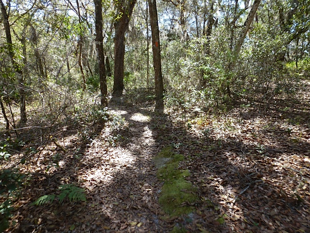 Florida Trail, Seminole State Forest