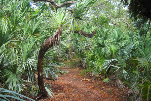 Eldora Hammock Trail