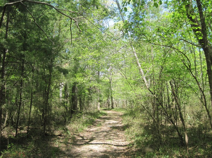 Old road along the Chipola River