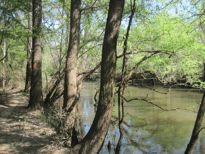 Hiking along the Chipola River