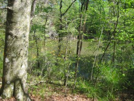 A ramble on the new Hinson Trail
