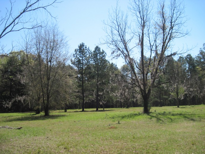Old pecan groves at Hinson