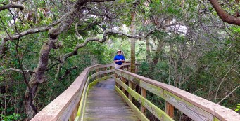 On the high boardwalk to the top of the midden
