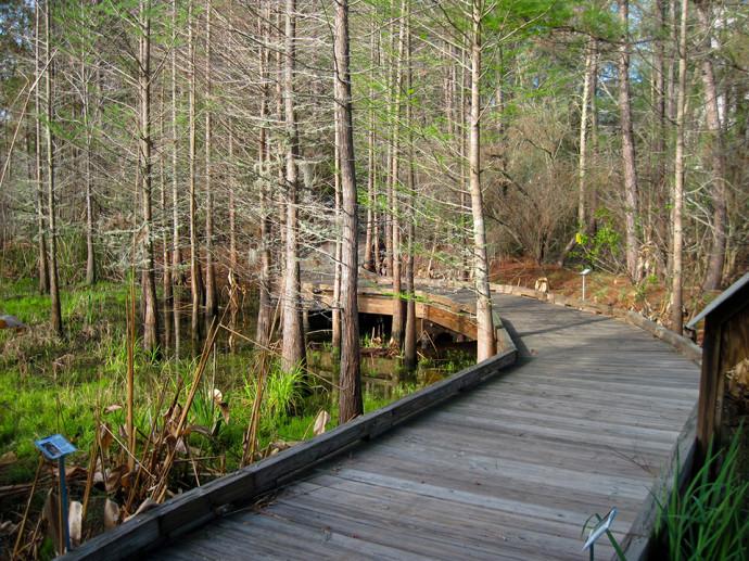 Boardwalk through the SEEP area