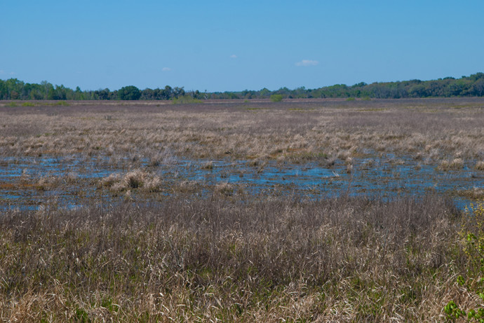 Wetlands of the Levy Prairie