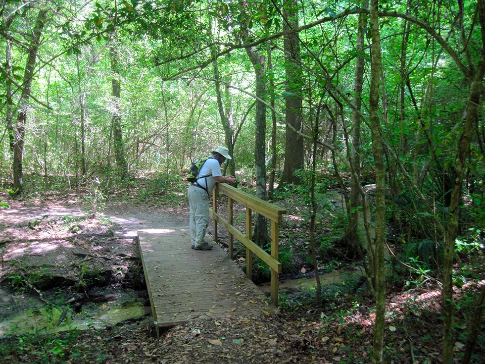 Moonshine Creek Trails Florida Hikes