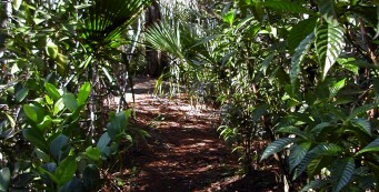 Eagle Trail at Grassy Waters Preserve