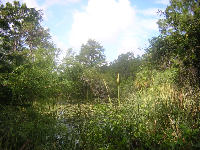 Wetlands Hammock Trail