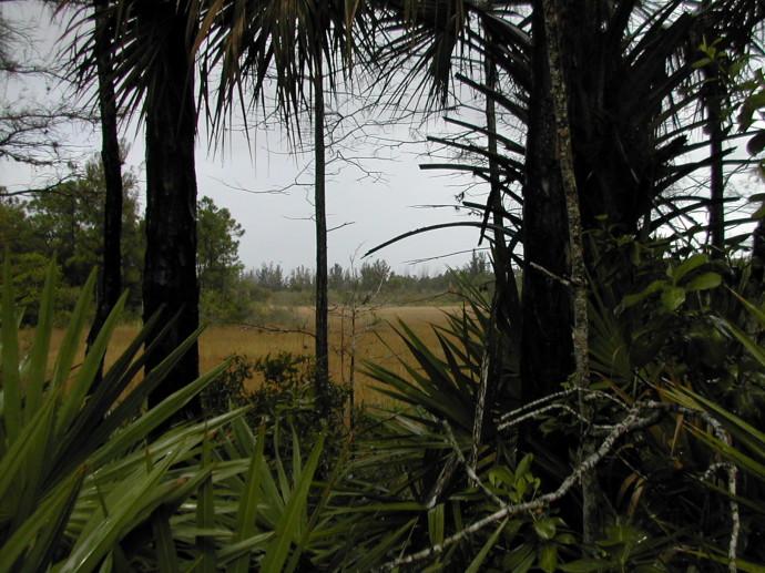 Hog Hammock Trail at Grassy Waters Preserve
