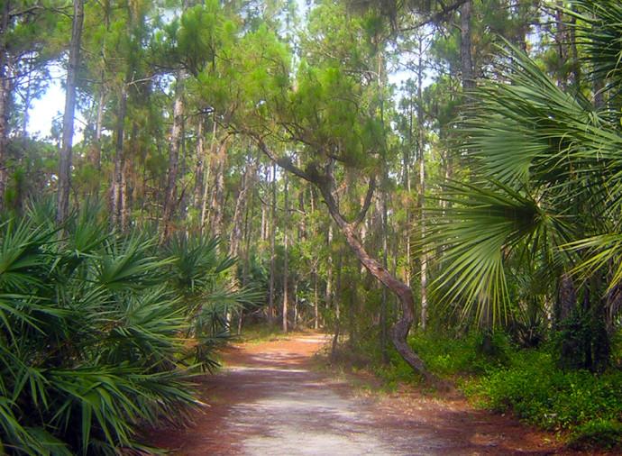 Okeeheelee Nature Trail at Okeeheelee Park