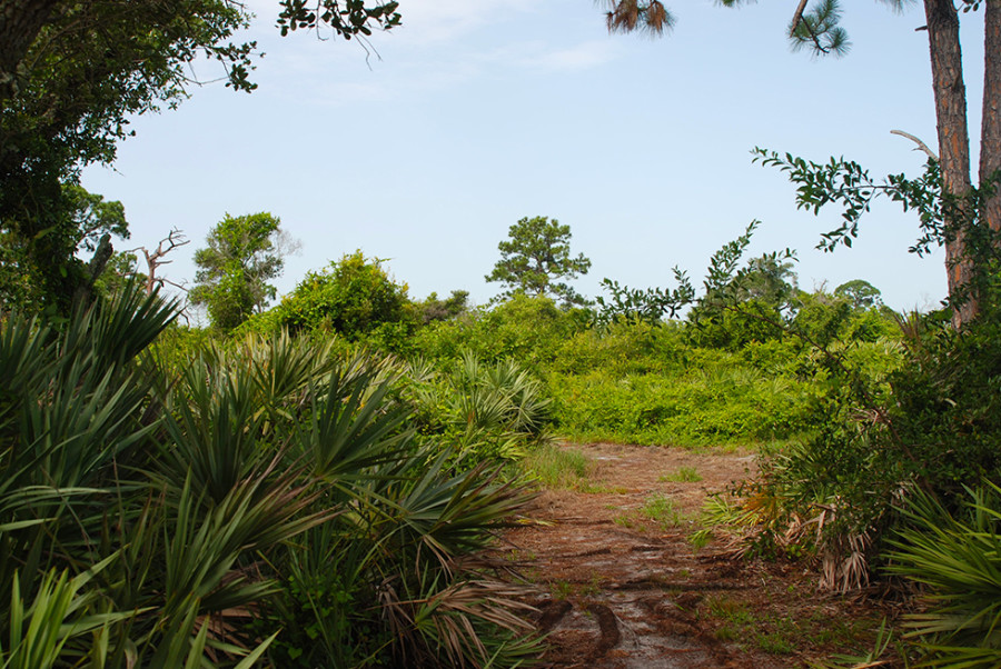 Serenoa Glade Preserve