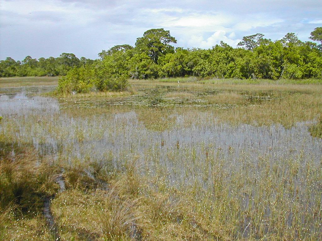 Spruce Bluff Natural Area