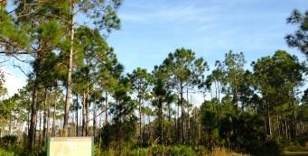 CREW Marsh Trails