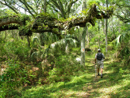 Florida Trail, Western Corridor