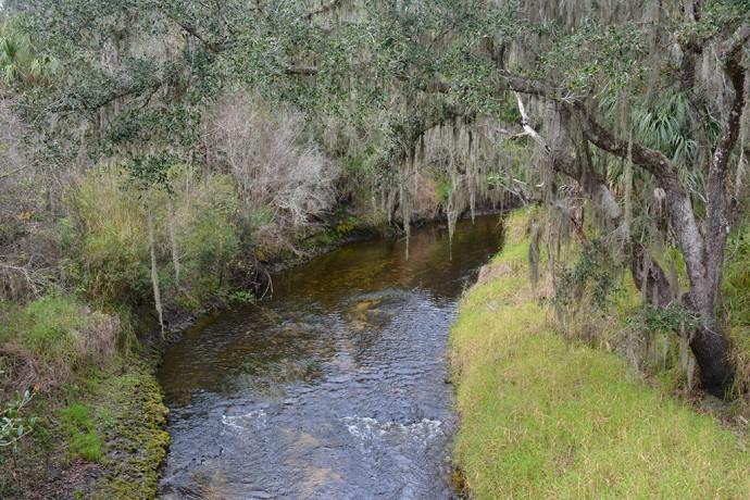 Rapids in Paynes Creek as seen from the swinging bridge