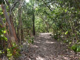 Key Largo Hammock Botanical State Park