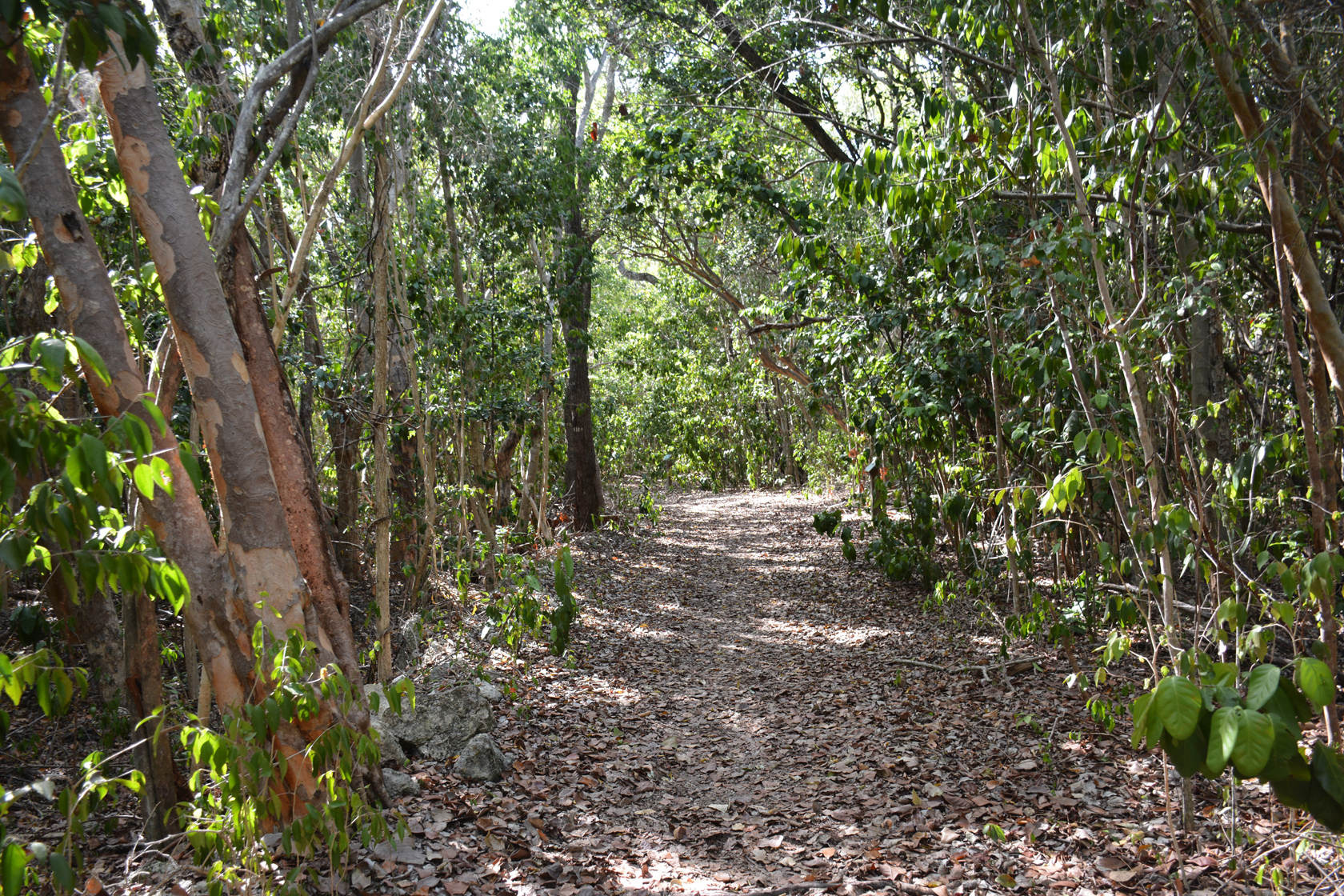 Key Largo Hammock Botanical State Park | Florida Hikes!
