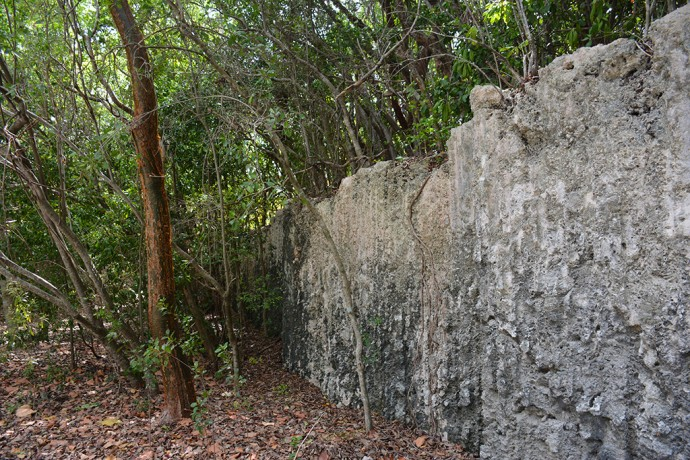 Fossilized coral in the quarries of Windley Key