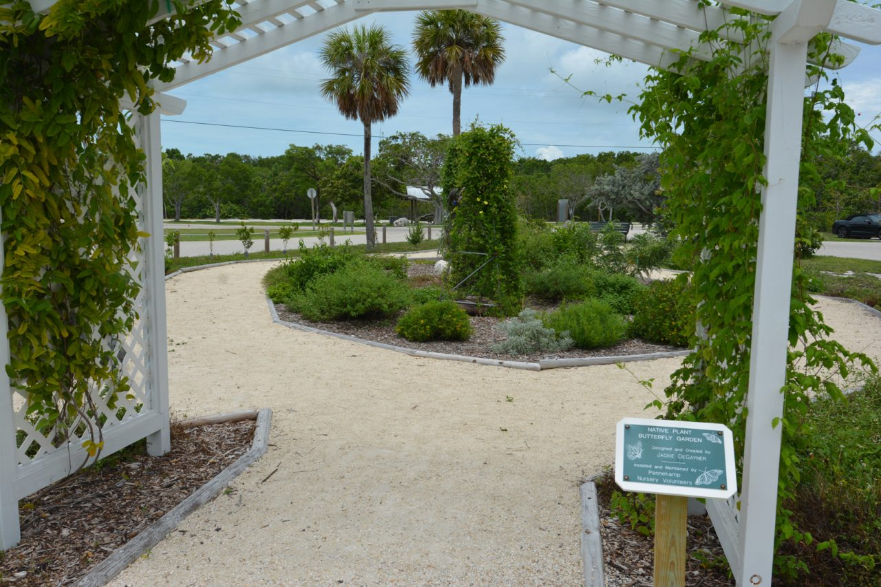 Native Plant Garden at Pennekamp